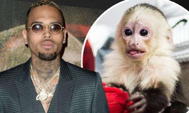 Chris Brown risca inchisoarea pentru animalul sau de casa